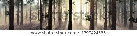 Automne brumeux matin prairie arbre Photo stock © Heru