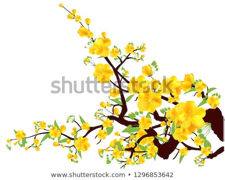 абрикос цветы белый изолированный весны саду Сток-фото © Leonardi