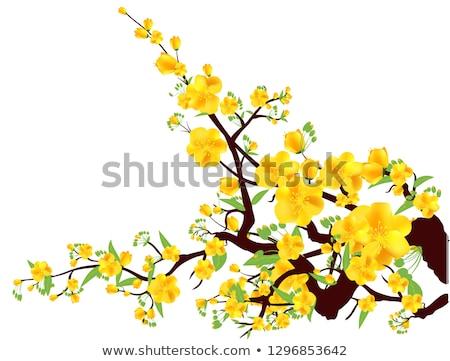 Aprikose Blumen weiß isoliert Frühling Garten Stock foto © Leonardi