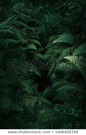 Páfrány trópusi növény zöld minta növekedés Stock fotó © lokes