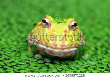 frog on a plant Stock photo © alptraum