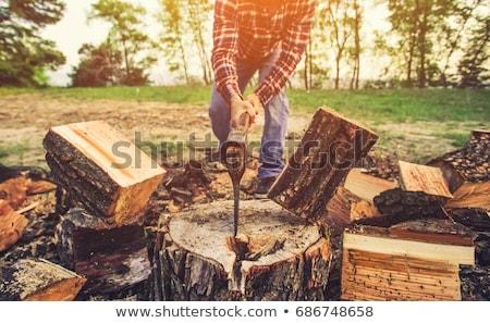 Bois de chauffage arbre herbe métal été Photo stock © Alegria111