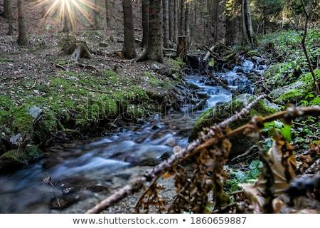 Kő folyóvíz absztrakt vízesés folyó fekete Stock fotó © Anettphoto