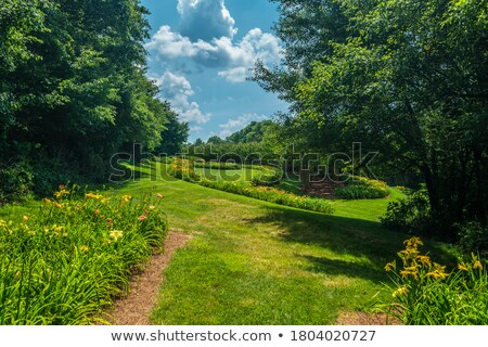 blooming tree along curved path stock photo © wolterk