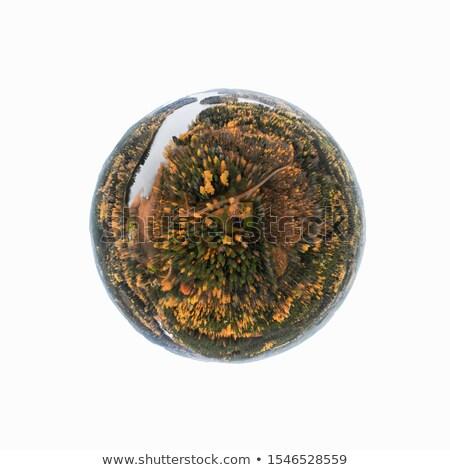 automne · faible · planète · arbre · nuages · forêt - photo stock © cherezoff