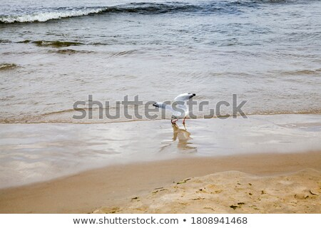 鴎 座って 表面 海 黒白 空 ストックフォト © bradleyvdw