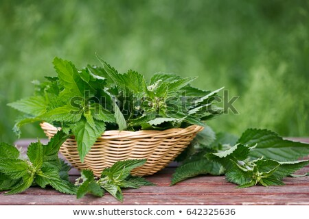 freshly stinging nettles in basket stock photo © virgin