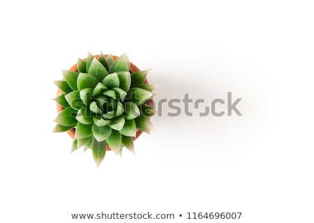 groene · cactus · plant · tuin - stockfoto © stocker