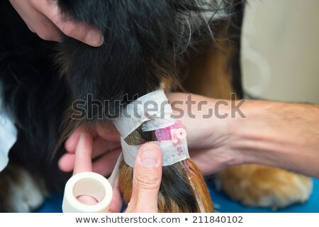 Veterinarian giving big dog an infusion Stock photo © ivonnewierink