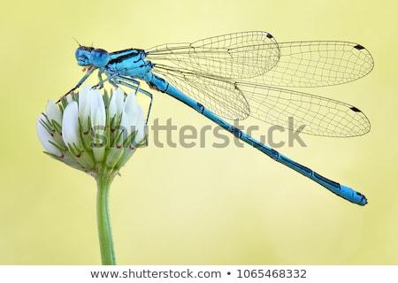 kék · pihen · fű · természet · egyedül · makró - stock fotó © trala