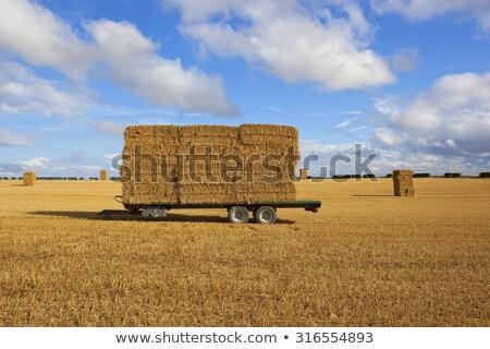 わら フィールド 収穫 時間 ヨークシャー ストックフォト © jenbray