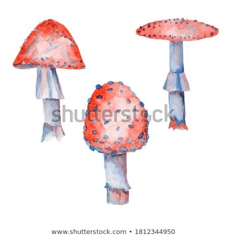 Rood vergiftige paddestoel bos natuur plant vliegen Stockfoto © martin33