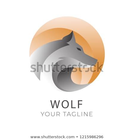 волка лице силуэта иллюстрация глаза Сток-фото © silverrose1