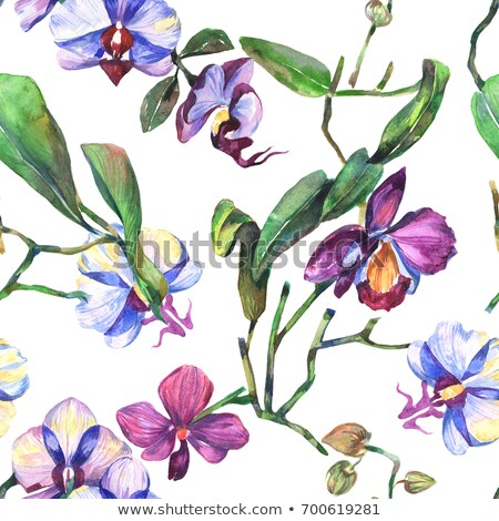 Stok fotoğraf: Watercolor Floral Background With Tropical Orchid Flowers Leave