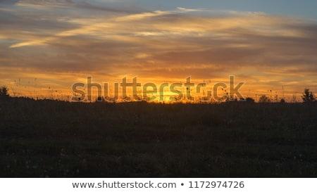 Herbe silhouette coucher du soleil silhouettes été lumière Photo stock © Madrolly