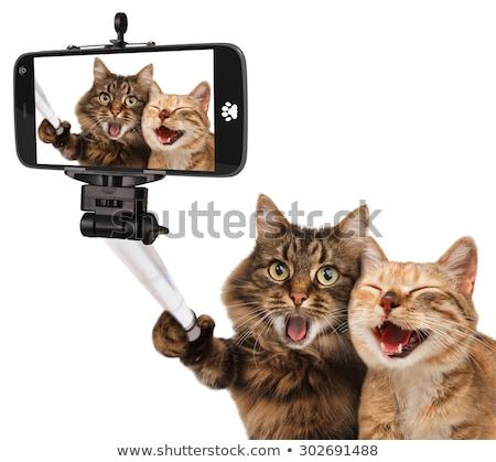 Stockfoto: Kat · witte · cute · oranje · poesje · glimlach