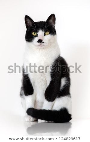 европейский черно белые кошки Vintage фото Сток-фото © dzejmsdin