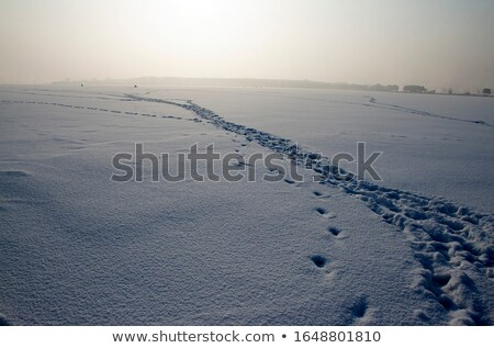 Footprints leading towards sunset on frozen lake Stock photo © Mps197