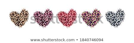 Pink cheetah print border Stock photo © kjpargeter