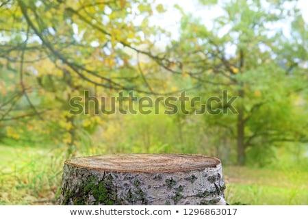 Zdjęcia stock: Drzewo · zielona · trawa · kwiaty · zielone · łące · lata