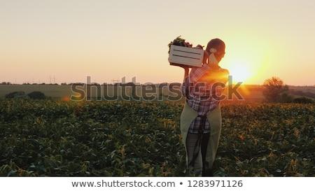 farmer woman standing with vegetables harvest in basket stock photo © vectorikart