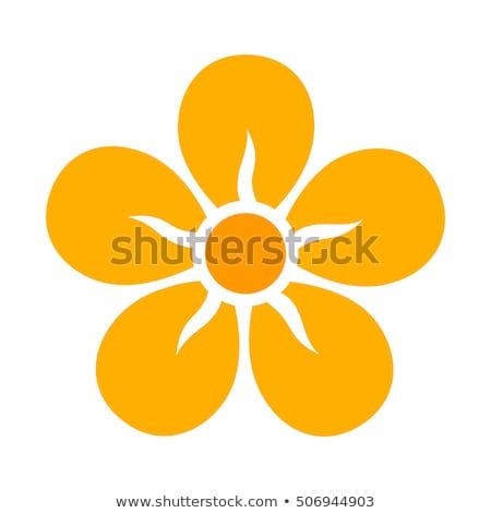A five-petal orange flower Stock photo © bluering