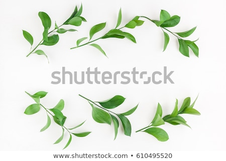 A border made of leaves and flowers Stock photo © bluering
