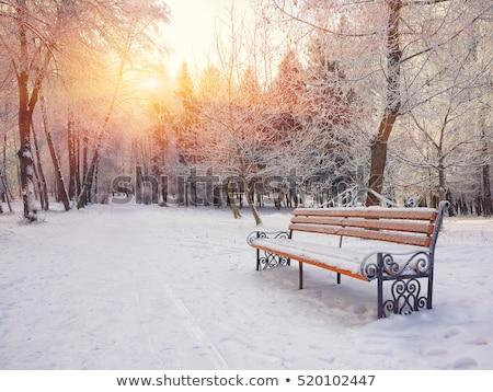 Winter landschap sneeuw sparren bos bergen Stockfoto © Kotenko