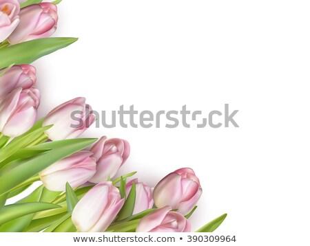 fleur · rose · espace · de · copie · grunge · fleur · fleurs - photo stock © beholdereye