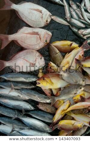 クローズアップ 魚 カウンタ 異なる 海 肉 ストックフォト © janssenkruseproducti