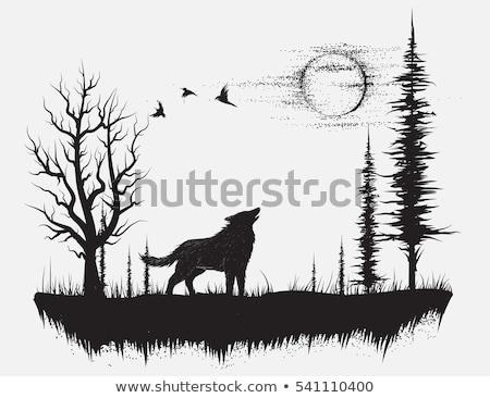 Loup clair de lune illustration chien lune bleu Photo stock © adrenalina
