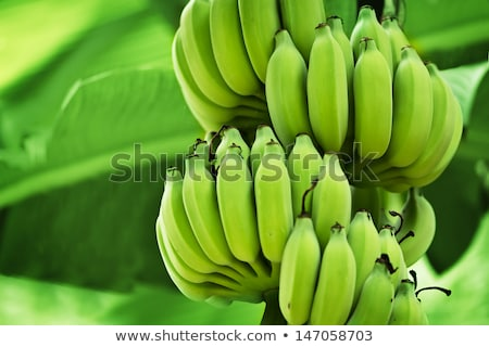 Banán banán növény közelkép étel fű Stock fotó © julianpetersphotos