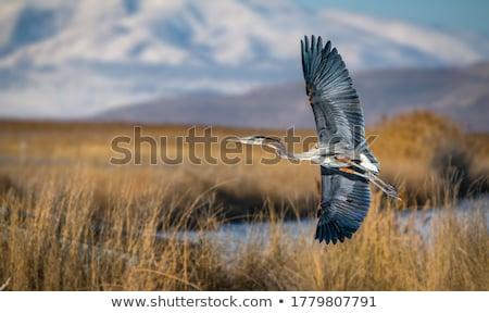 Reiger vliegen blauwe hemel hemel natuur dier Stockfoto © goce