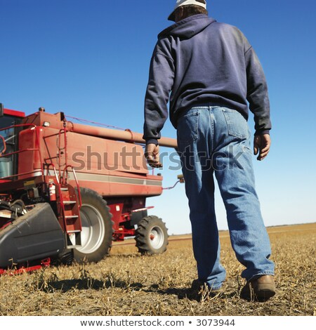 low angle view of soybean in field stock photo © stevanovicigor