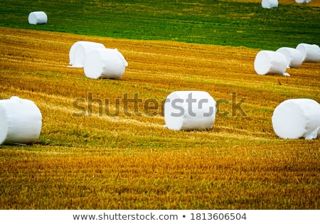 Sitting on a Hay Bale Stock photo © IS2