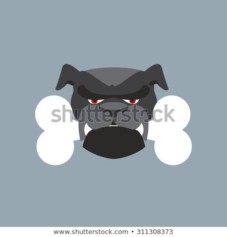 scary dog head angry bulldog and bone pet head stock photo © popaukropa