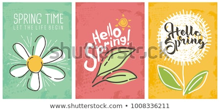 Hello Spring hand Lettering with daisy flower, vector illustration. Stock photo © ikopylov