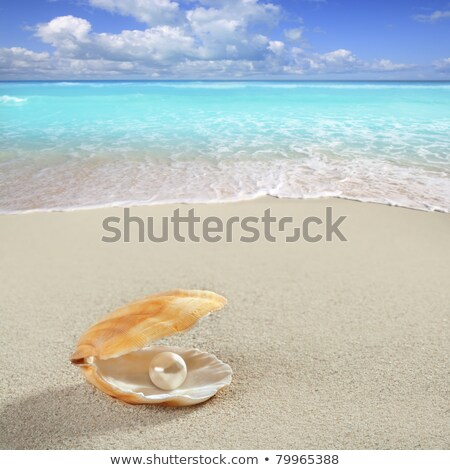 clams shell open in caribbean beach sand Stock photo © lunamarina