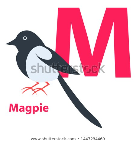 Pink letter M Ordinary or European Magpie on ABC Stock photo © robuart