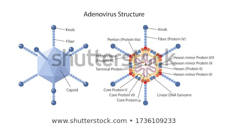 Adenovirus Stock photo © Lightsource