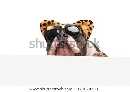 Kafa komik amerikan güneş gözlüğü leopar Stok fotoğraf © feedough