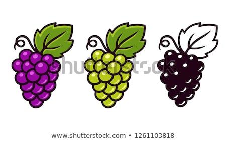 green grape vector icon logo symbol sign Stock photo © blaskorizov
