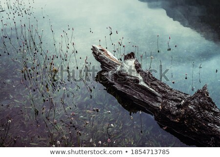 Troncos lago ver árvore madeira Foto stock © boggy
