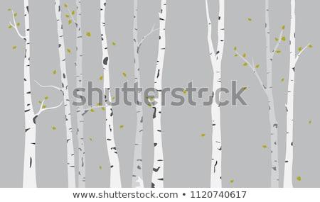 Ptaków charakter lesie scena ilustracja liści Zdjęcia stock © bluering