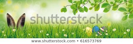 Easter egg zając kłosie twarz zielone lasu Zdjęcia stock © limbi007