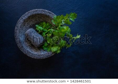 Coentro fresco comida folha verde preto Foto stock © lunamarina