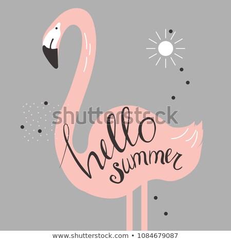 Sweet лет розовый фламинго птица плакат Сток-фото © robuart