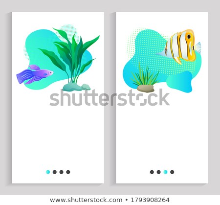 Aquaristics Marine Life, Fish and Flora Seaweed Stock photo © robuart