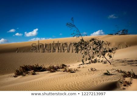 Természetes park arany homok természet háttér Stock fotó © hamik