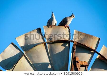 Traditional rustic windmill  Stock photo © grafvision